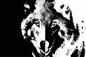 שני זאבים