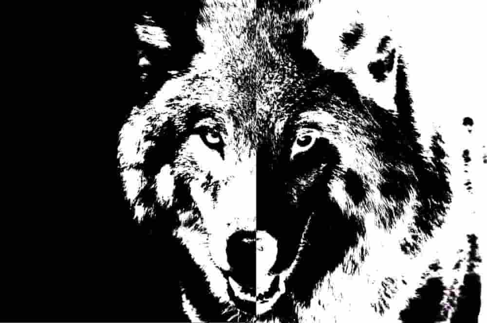 You are currently viewing שני זאבים – סיפור אינדיאני לילדים שחשוב לספר אחרת